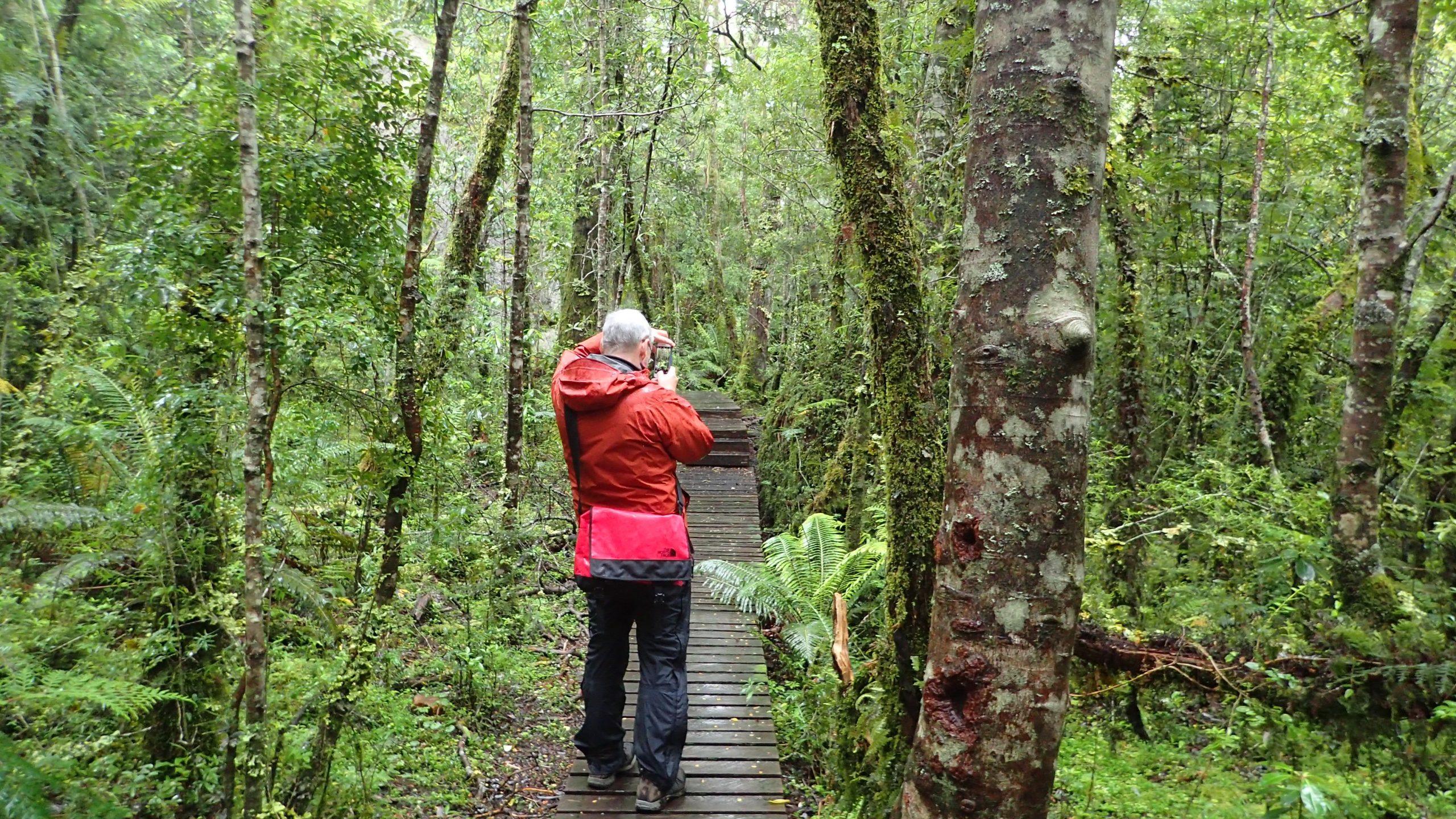 R. Garilleti - Valdivian rain forest
